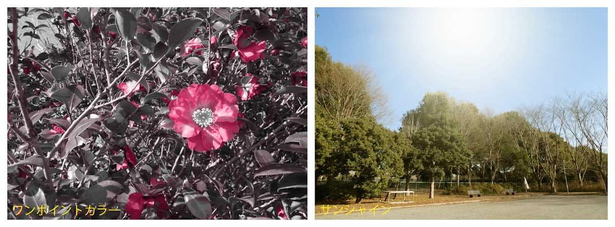 椿の花と公園風景