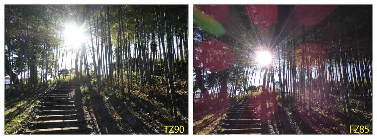 逆光で撮影した竹藪