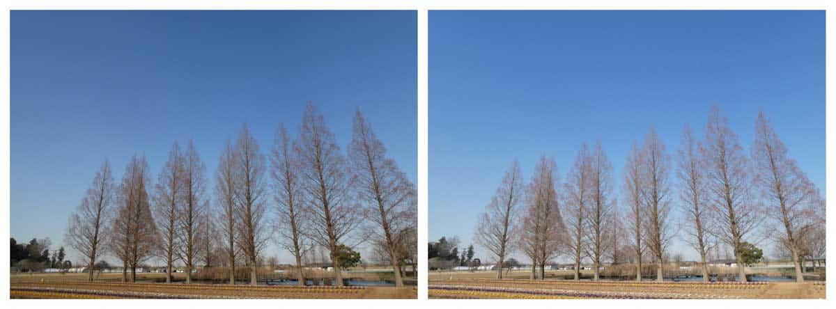 木々と青空の広場