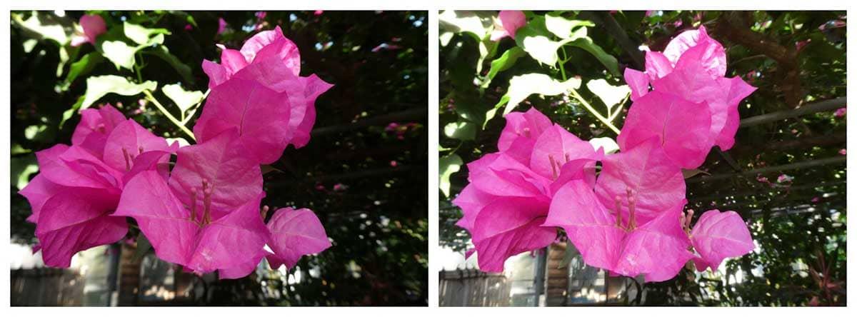 ピンク色の華やかな花