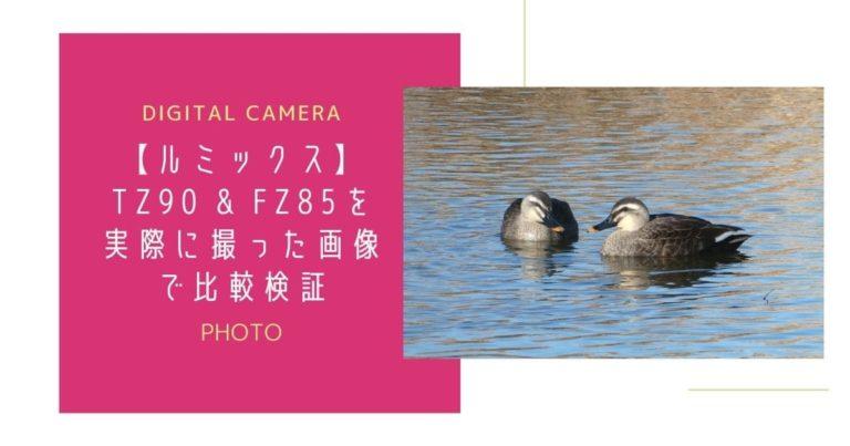 池で泳ぐ2羽のカルガモ