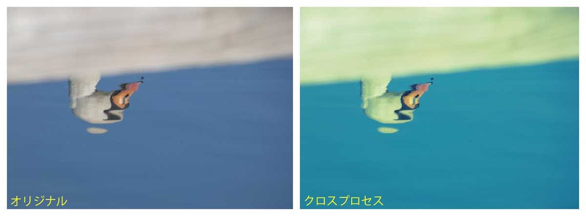 水面に写るハクチョウ