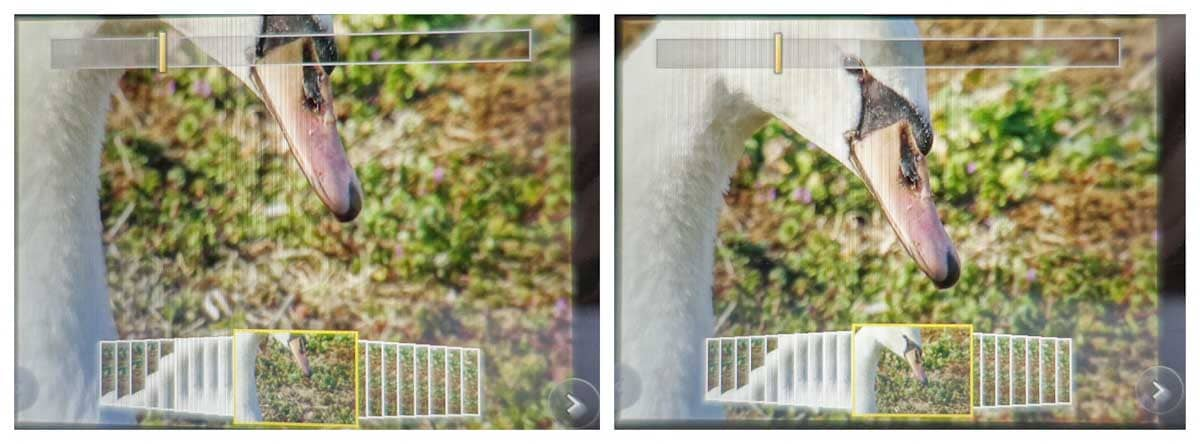 4Kフォトで撮影したハクチョウ
