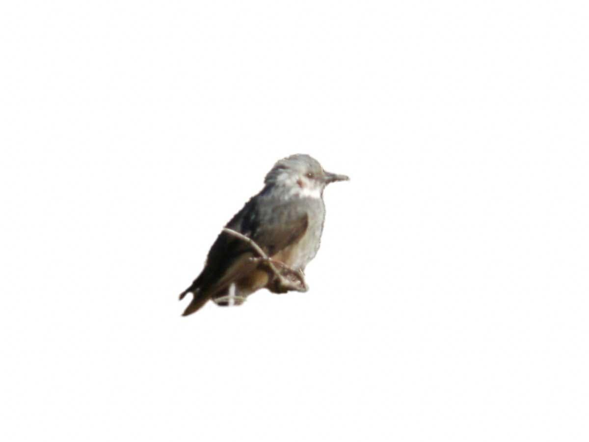 遠くを見つめている木に止まっている鳥