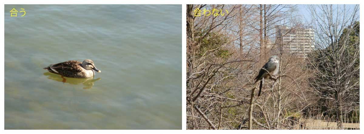 木に佇む鳥と池で泳ぐカルガモ