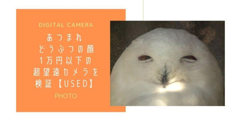 微笑んでいるように見える白いフクロウ