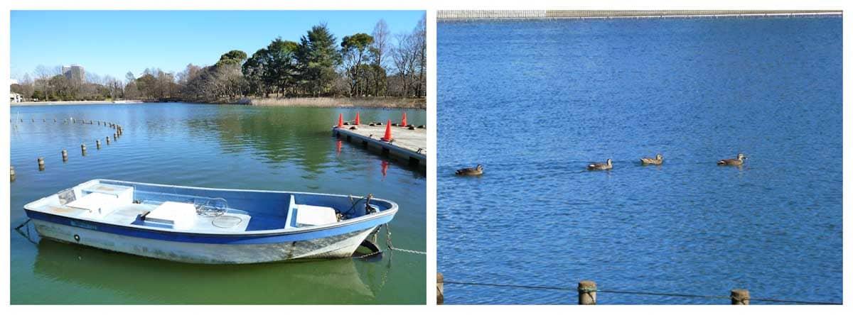 湖に浮かぶボートとカルガモの家族