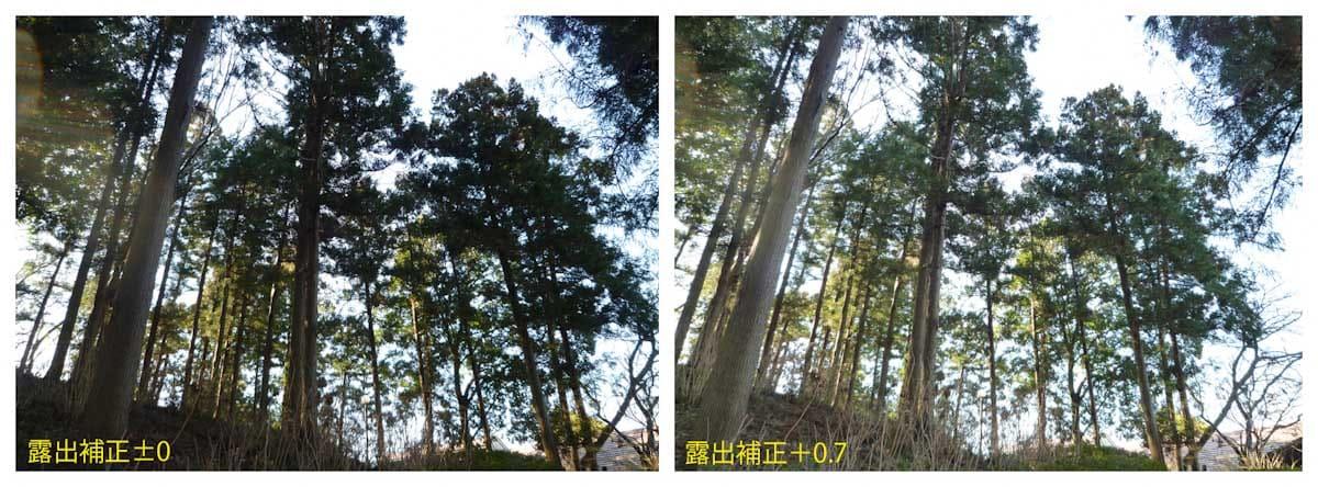 一本道に続く林
