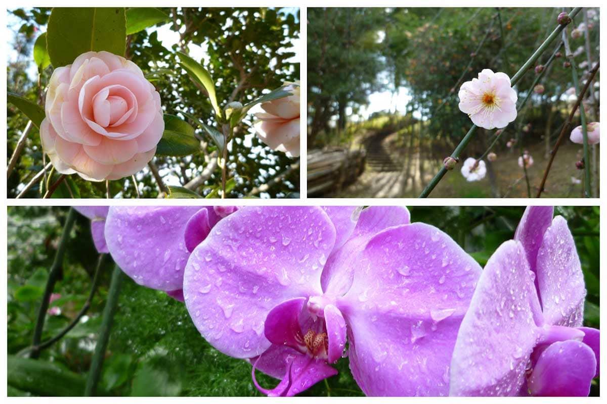 ツバキや梅の花々