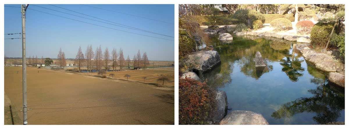 公園風景と庭園の池