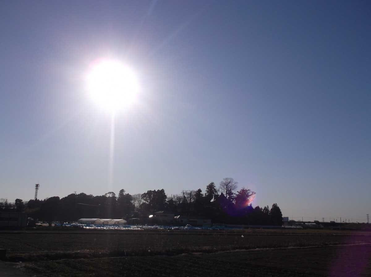 逆光で撮影した公園風景