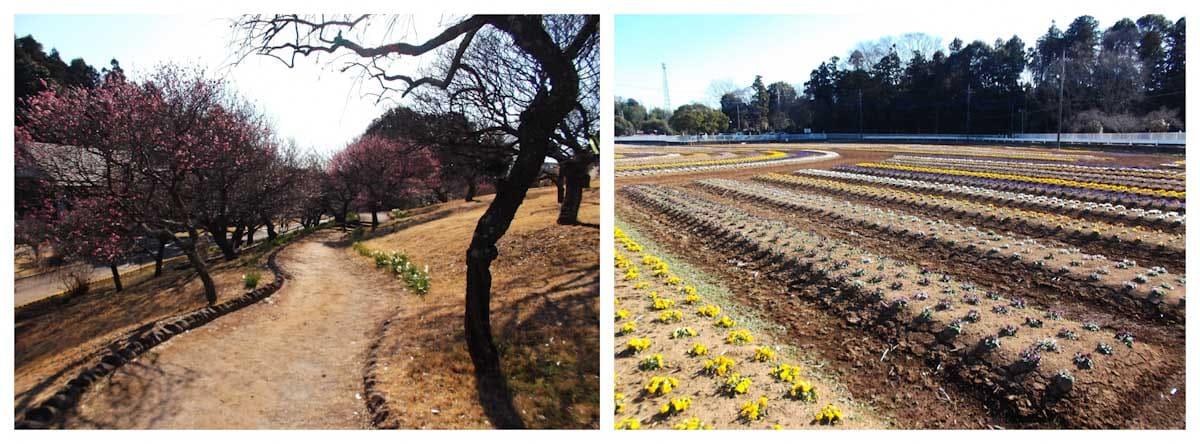 花が咲く公園風景