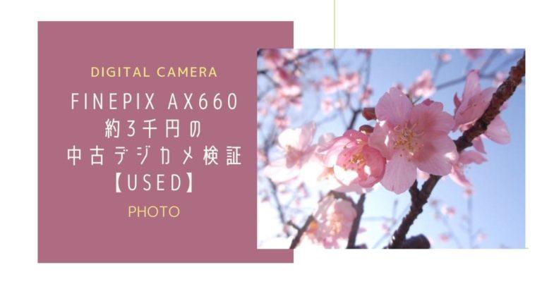見ごろの河津桜