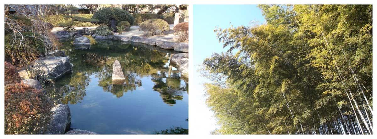 庭園にある池と竹林