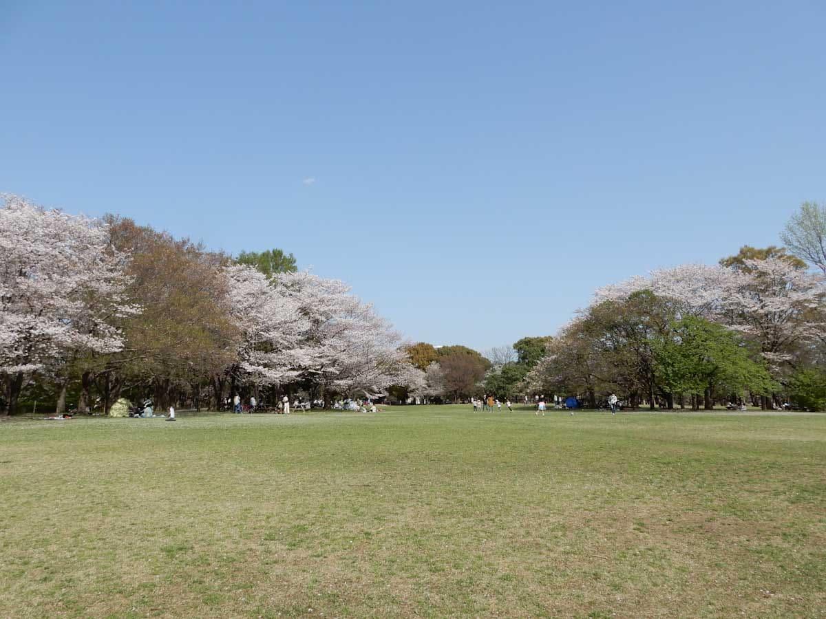 桜が満開の公園
