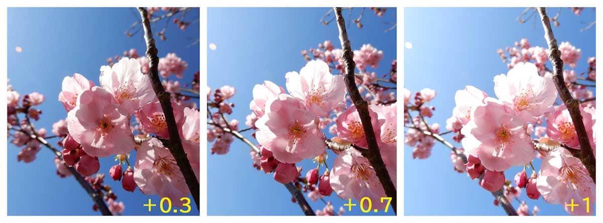 ピンク色をした桜の花