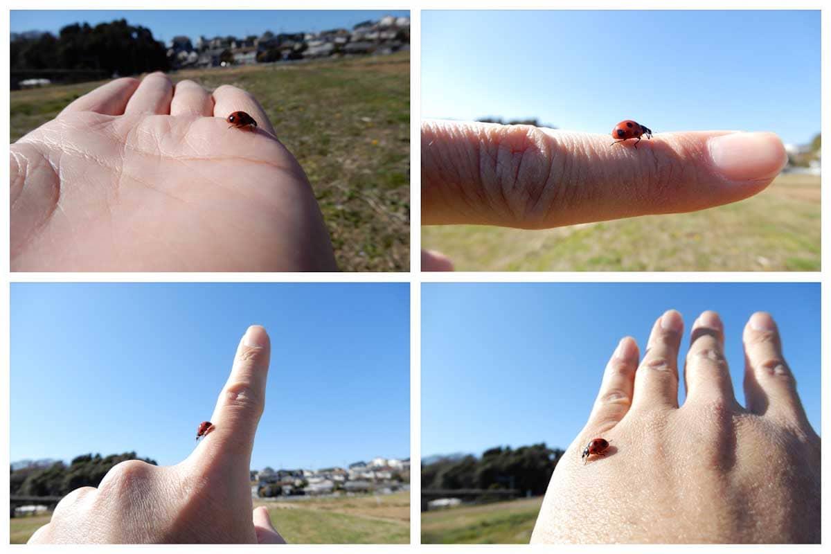 手のひらに乗る赤いてんとう虫