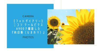 【フォトダイアリー】ニコン クールピクスA900で撮影した『向日葵(ひまわり)』